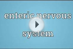 Enteric nervous system Meaning