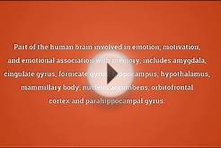 Limbic system Meaning